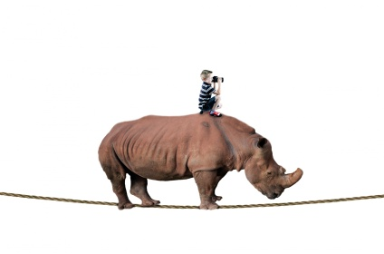 rhino-and-boy-balancing-on-rope-1464179344nj3