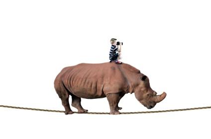 rhino-and-boy-balancing-on-rope-1464179344nj3